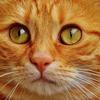 【予言】松原照子氏だけではない~ケイン氏や動物たちもトランプ大統領誕生を予言していた