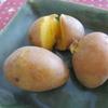 ジャガイモ「インカのひとみ」