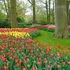 オランダ キューケンホフ公園のチューリップ