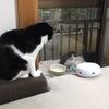 【エムPの昨日夢叶(ゆめかな)】第1378回『事務所が猫カフェに大変身!超~癒され空間が誕生した夢叶なのだ!?』[11月26日]