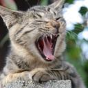 猫になりたい!日記