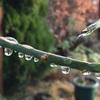 12月の大雨