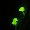 シイノトモシビタケを観るなら今が時期(^^)幻想的な淡く光る可愛いキノコ考察