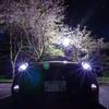 夜桜×MINI