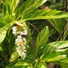 【沖縄の植物】先日行った瀬長島で撮った植物の写真