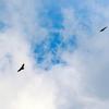 白樺峠の鷹たち