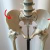骨盤のねじれでが原因で脚の長さが違うかも。