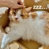 愛猫の成長、それは嬉しいような少し淋しいような。