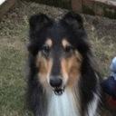 コリー犬ナナ&老犬ロッキーとの日々