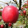高野のリンゴと奥出雲の延命水