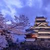 国宝松本城の夜桜2018