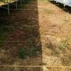 粒状除草剤を5種類散布して2ヶ月が経ちましたが、その効果は?