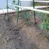 家庭菜園~道民農場~
