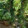 朝の庭仕事