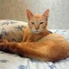 【保護】【多頭飼い】44匹の猫が住んでいる家 ~猫宅のお話をしましょう(その1)とら~