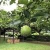 小石川植物園22