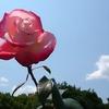 美しく咲いて