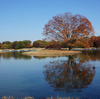 昭和記念公園 水鳥の池と紅葉