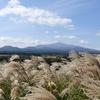 済州島(チェジュ島)フォトスポット #ススキの輝く「サングムブリ」