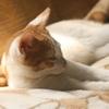 白猫のどさと倒るる夏座敷 藤木魚酔