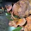 恐竜展がすごすぎた話