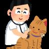 ウチの猫に元気でいてほしいから!猫がなりやすい病気と予防法を解説