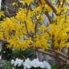 朝の庭の花たち