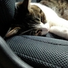 眠り猫&小説更新♪