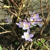 春を感じてきているので「春一番」をきいてみました