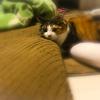 【愛猫日記】毎日アンヌさん#238