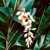 沖縄の写真 梅雨時期の花