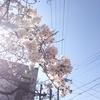 【事例紹介】新たなスタート!~多言語 SNS~