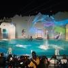 須磨水族館のイルカナイトライブに感動!絶対に見ておくべき!
