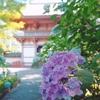 水に浮かべた紫陽花に癒された久安寺