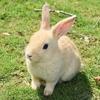 あなたはどちらのウサギを追う??