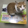 猫トイレ(ユニチャームのデオトイレ)を購入しました!