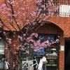 さくら、桜、SAKURA良い感じ