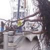 定置網に大きな漂流物が・・・