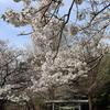 【鎌倉いいね】鎌倉イチ険しい化粧切り通しを抜けた先には....桜が美しい葛原岡神社が。