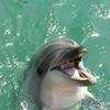 2016.GW 和歌山県太地くじら博物館 イルカと直接触れ合える