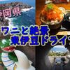 オブザイヤー的旅のススメ ~静岡・東伊豆でワニに会う~