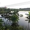 ベトナムの片田舎で約1年間、未経験から農業をしてみての振り返り