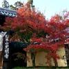 連休初日は京都に紅葉狩りに!