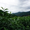 日本茶の旅