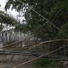物集女の竹藪