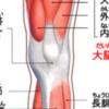 【接骨院の結果】ひざ内側が痛い、ひざ下からスネ外側が痛い