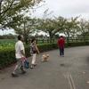 蓮華寺池に行ってきました(o^^o)
