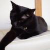 今日の黒猫モモ&白黒猫ナナの動画ー862