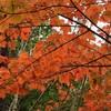 箕面山の紅葉と唐池公園