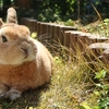 うざぎと赤ちゃんのいる生活。12歳になる愛兔との別れ。